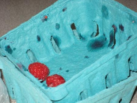 raspberry carton